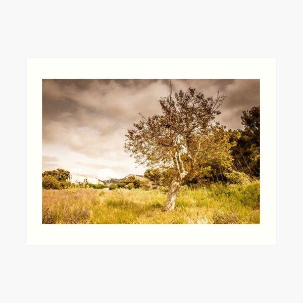 Tree in post apocalyptic atmosphere Art Print