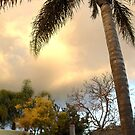 sun set between palms by Bettysplace