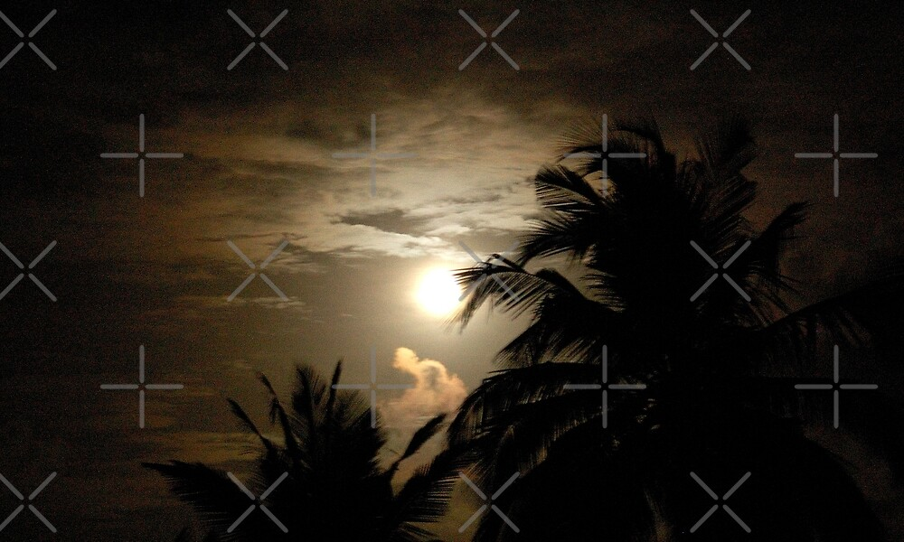 PALM SILHOUETTES IN THE MOONLIGHT by Magriet Meintjes