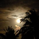 PALM SILHOUETTES IN THE MOONLIGHT von Magriet Meintjes