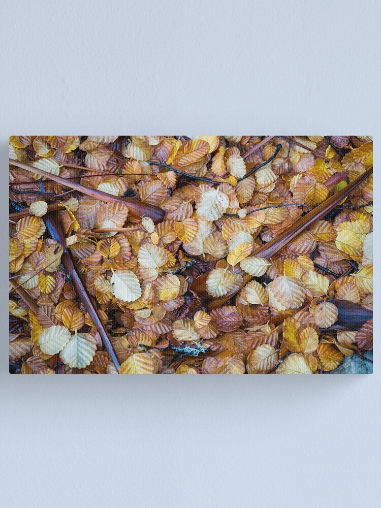 Alternate view of Forest floor Canvas Print