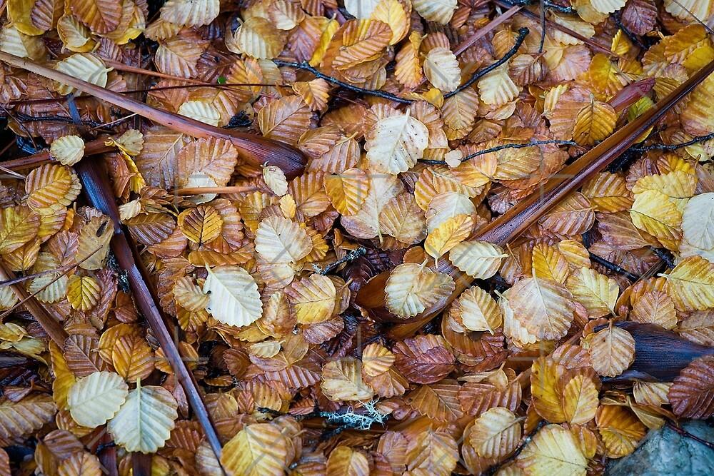 Forest floor by Mel Brackstone