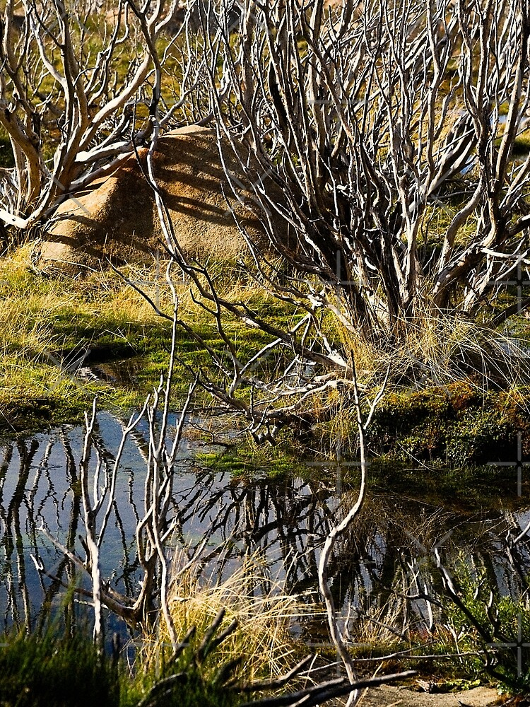 Devil's gullet wetlands by MelBrackstone