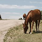 Grazing On The Prairie by Lori Peters