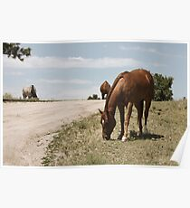 Grazing On The Prairie Poster
