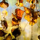 Autumn colours by Mel Brackstone