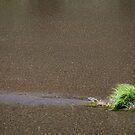 River Grass by Josef Grosch