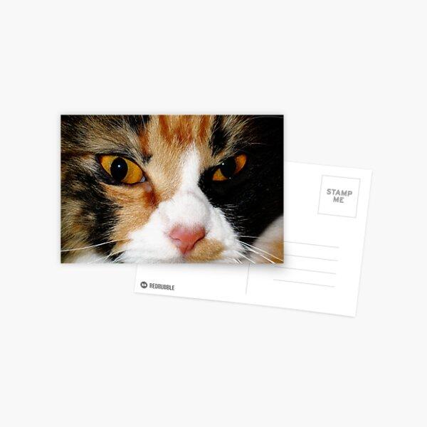 AMINAH BEE FACE, CAT PHOTOGRAPHY Postcard