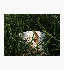 CASH THE BULL-CUTE-DOG Photographic Print