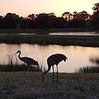 Sandhill Kräne, die den Sonnenuntergang genießen von TheBankArtist