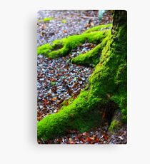 """""""Natures Claws"""" Canvas Print"""