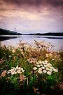 Loch Ard wildflowers by David Mould