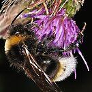 Bee by Gareth Jones