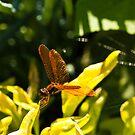 Golden Dragonfly by ElyseFradkin