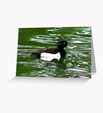 Tufted Duck (Aythya Fuligula) Greeting Card