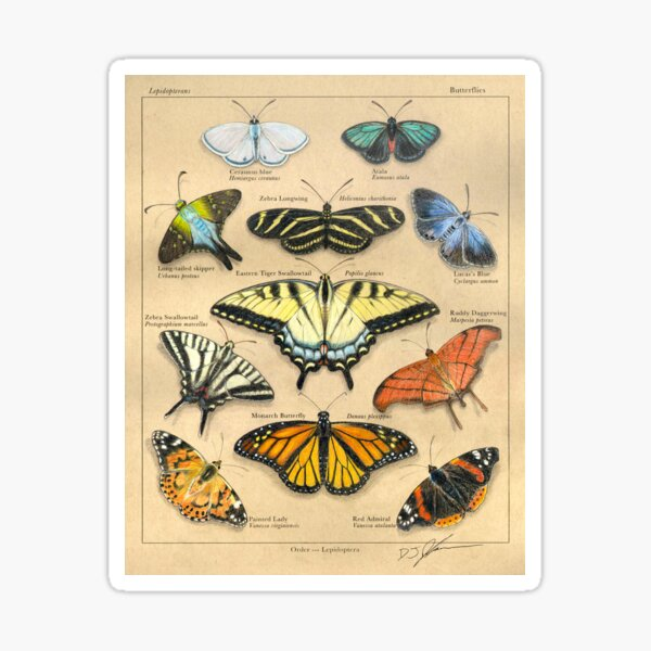 Lepidopterans Plate Illustration Sticker