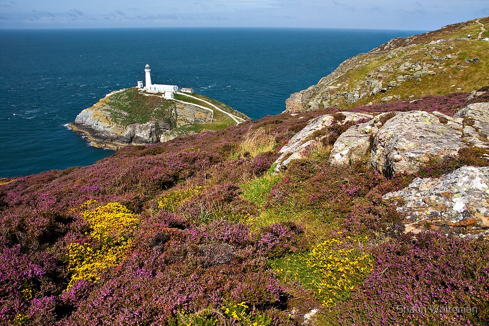 Heather at South stack by Shaun Whiteman