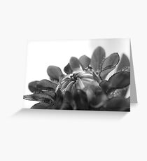 Black and white flower ready to open  Greeting Card