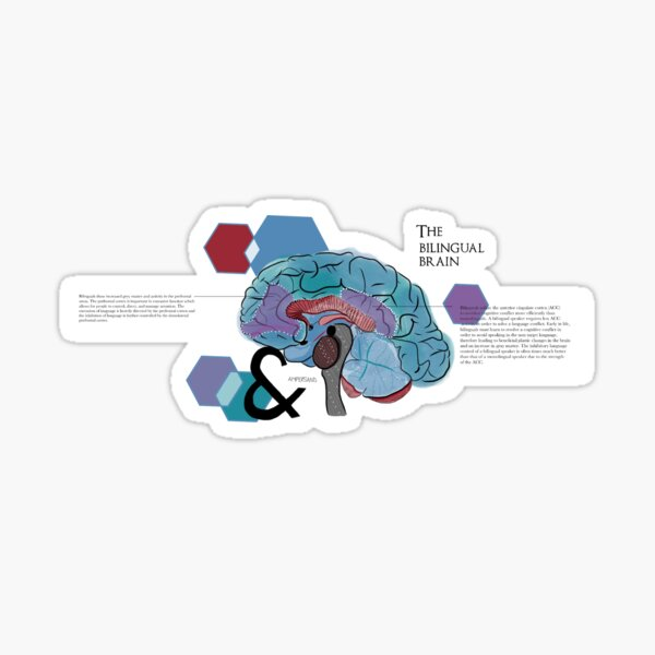 The bilingual brain Sticker