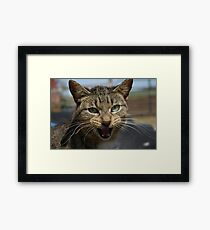 A Barn Cat Framed Print