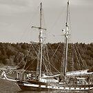 Sailing by Lynn  Gibbons
