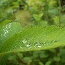 Water Drops by Glenn Esau