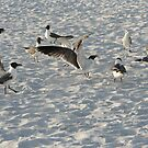 Having a Seagull Meeting by Missy Yoder