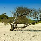 The Naked Tree by vasasphoto
