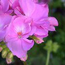Nahaufnahme von Blumen von artbycaseylh