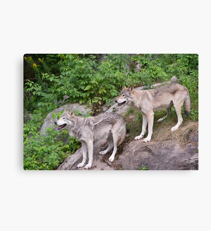 Timberwolf pair Canvas Print
