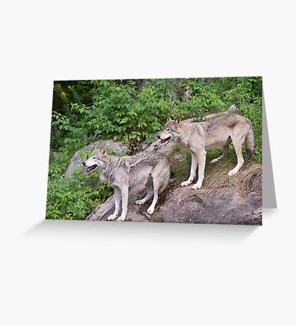 Timberwolf pair Greeting Card