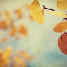 Aspen Leaves In The Wind by ameliakayphotog