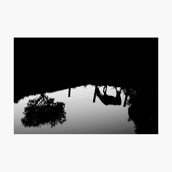 'Dark horse' Photographic Print