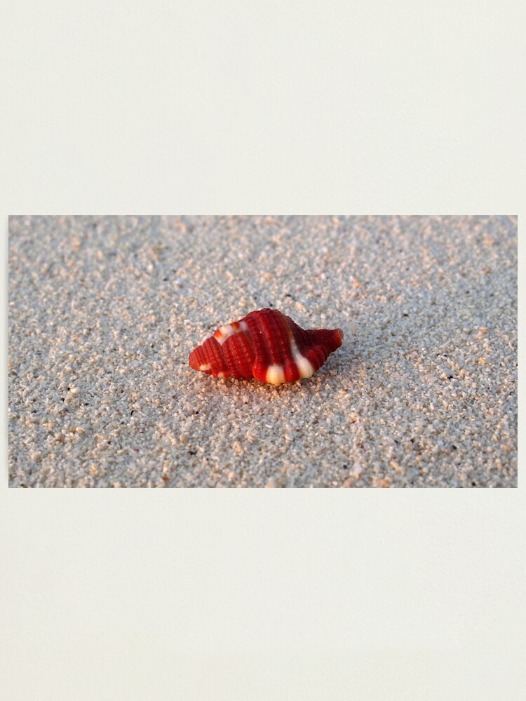 Alternate view of Perfection in Miniature Photographic Print