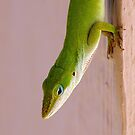 Green Anole by Bill Morgenstern
