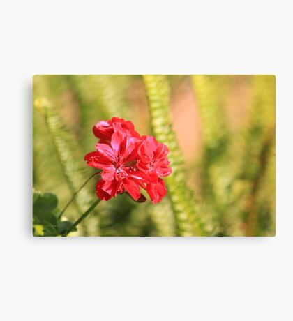 Perfect conditions to bloom Canvas Print