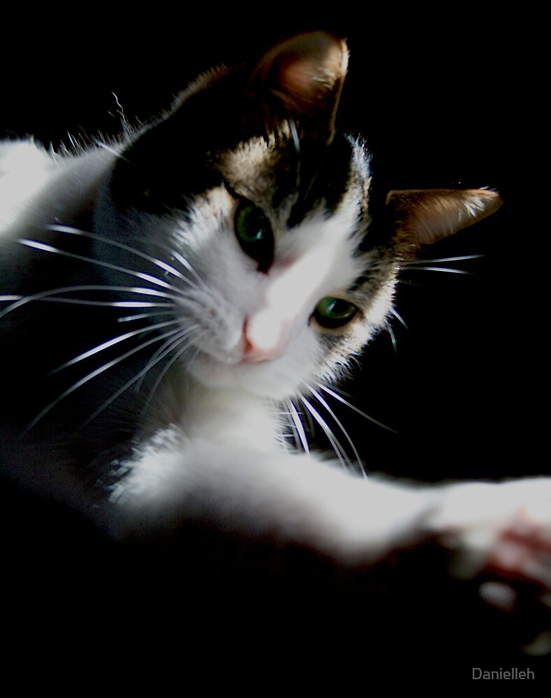 Playing with the light & shadows and a cat called Gary I  by Danielleh