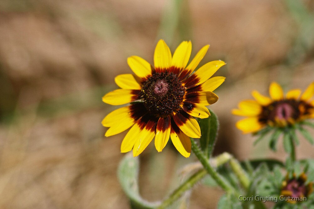 A Couple of Sunny Flowers for You by Corri Gryting Gutzman