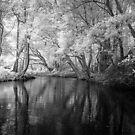 Freshwater Ck by Mel Brackstone