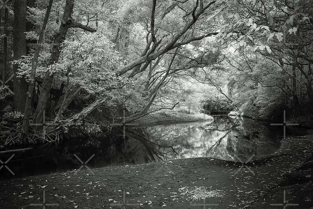 Reflecting infrared by Mel Brackstone