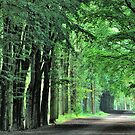 The green lane miracle by jchanders