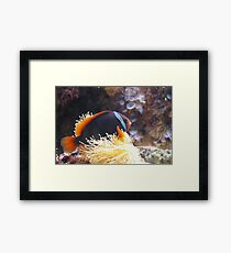 Orange Fish Framed Print