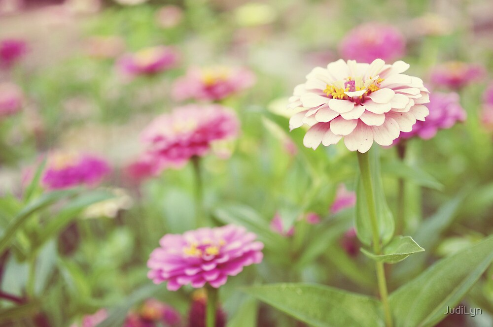 Zinnia patch by JudiLyn