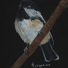 Chickadee bird by Martina Fagan
