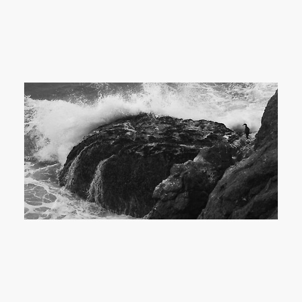 Crashing Wave, Hidden Bird Photographic Print