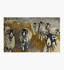 Stomping Swaledales Photographic Print