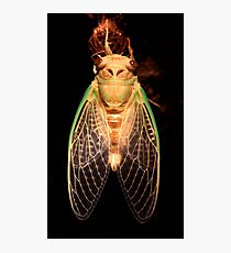Cicada Two Photographic Print