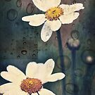 Flowers and Rain by susan stone