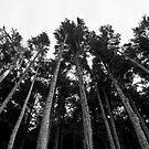 Forest - Ketchikan, Alaska by Lindsey Butler
