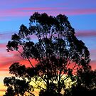 My gum tree ! by Neophytos